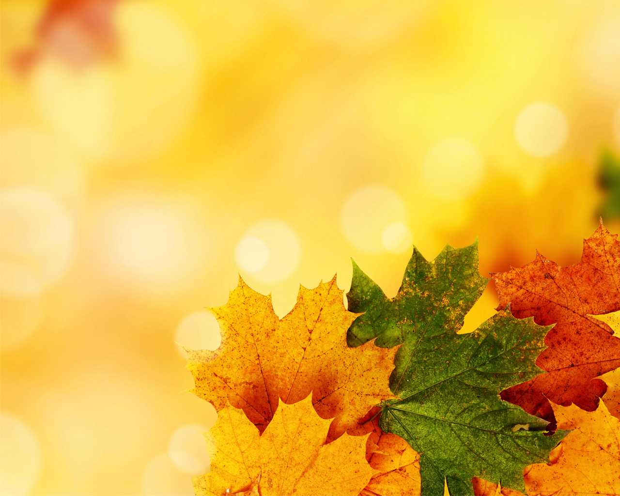 Fall Ppt Templates - Mahre.horizonconsulting.co With Free Fall Powerpoint Templates